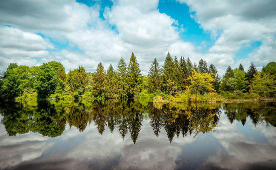 Trees, Woods, Reflections, Water Reflections