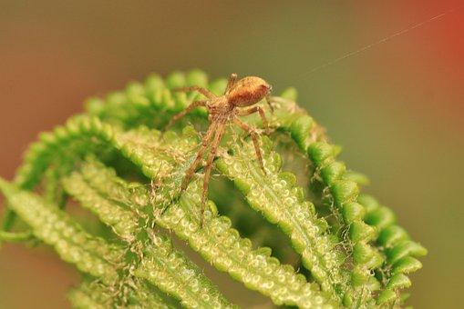 Fern, Strecker Spider, Green, Plant, Leaf Fern, Forest
