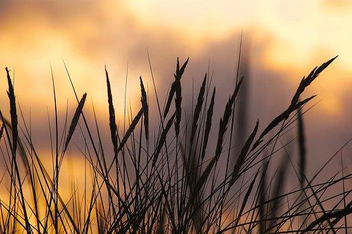 Abendstimmung, Dune, Beach, Coast, Sunset, Nature