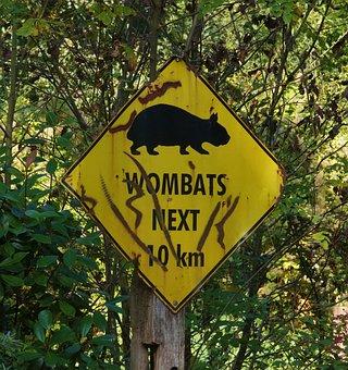 Wombat, Shield, Warning, Sheet, Stainless, Old