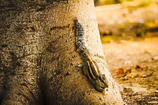 Squirrel, Animal, Wild, Nature, Wildlife, Cute, Forest