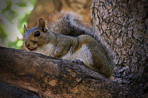 Squirrel, Rodent, Animal, Tree