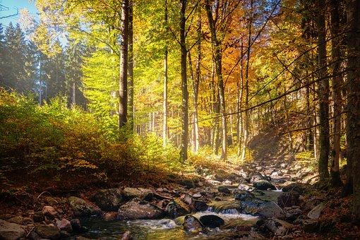 Forest, Autumn, Bach, Nature, Autumn Colours
