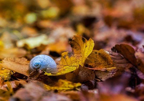Nature, Animals, Wallpaper, Background, Autumn, Shell