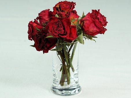 Rose, Red, Love, Dry, Blossom, Bloom, Romantic