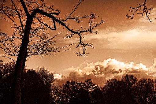 Tree, Branch, Silhouette, Bare Tree, Skies, Clouds