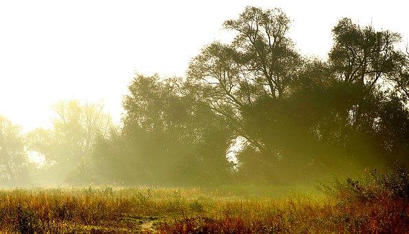 Gold Glitter, Sunrise, Brightness, Fields, Forests
