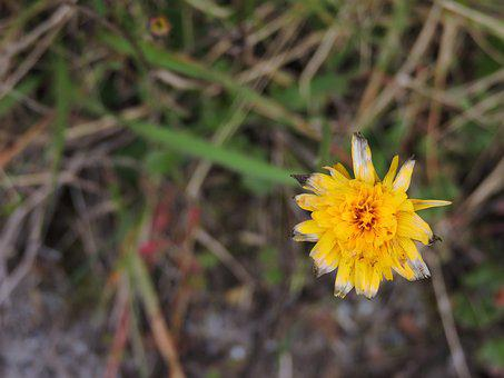 Flower, Yellow, Petals, Yellow Flower, Nature