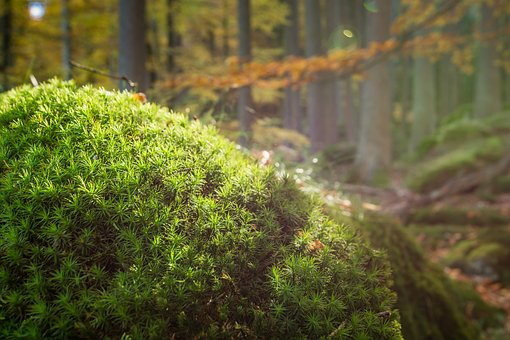 Forest, Moss, Nature, Autumn, Forest Floor