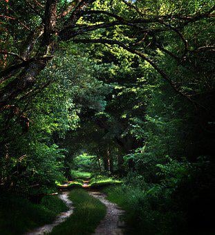 Forest, Way, Trail, Dark, Tree, Landscape, Green