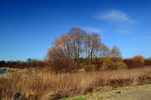 Nature, Landscape, Tree, Autumn, Park