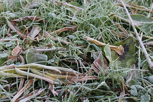 Ground Frost, Frost, November, Morning, Nature, Cold