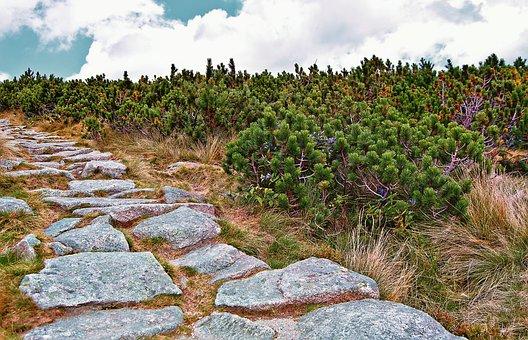 Mountains, Tatry, Kosówka, Mountain Pine, Trail, Nature