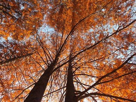 Nature, Autumn, Leaf, Leaves, Landscape, Sunny, Golden