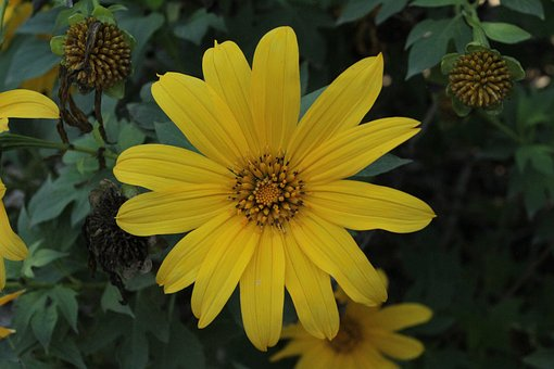 Yellow, Flower, Floral, Nature, Spring, Summer, Plant