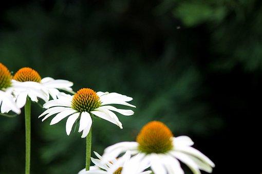 State Garden Show, Blossom, Bloom, Nature, Flower