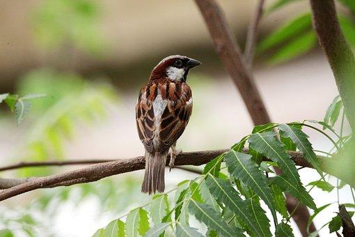 Birds, Tree, Leaf, Spring, Floral, Summer, Forest