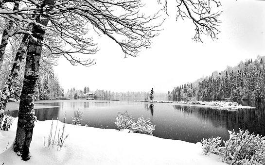 Winter Landscape, Winter, Snowy Landscape, Cold