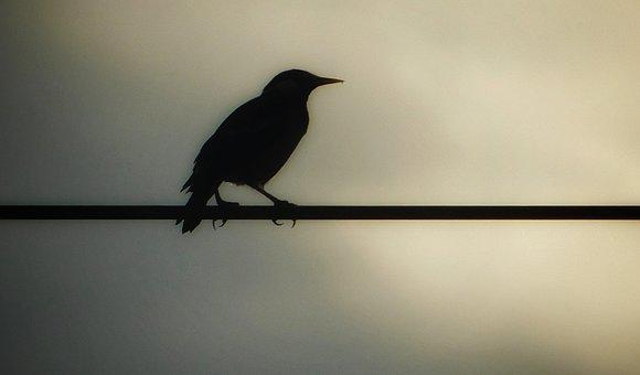 Crow, Morning, Wire, Seeing, Sky