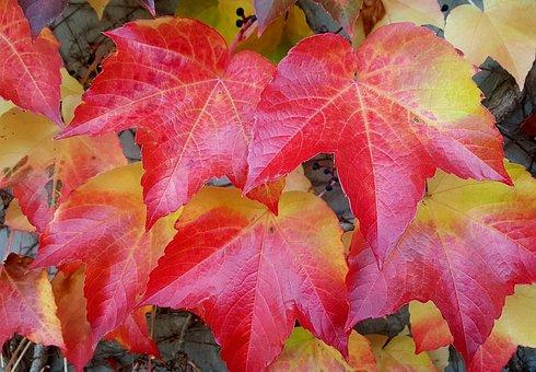 Autumn, Fall Leaves, Fall Color, Leaves, Autumn Colours