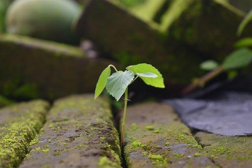 Seed, Wild Plant, Plant, Nature, Wild, Botany
