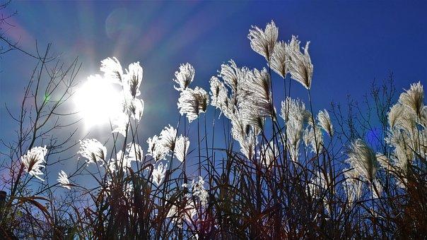 Sun, Beams, Sunbeams, Landscape, Sky, Light, Bright