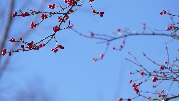 Berries, Landscape, Bush, Tree, Nature, Branch, Berry