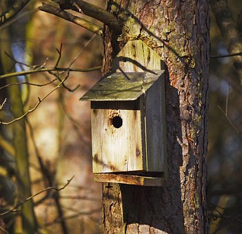 Nesting Box, Forest, Pine, Sunbeam, Damaged, Aviary