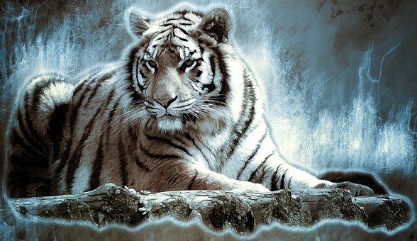 Bengaltiger, Tiger, Big Cat, Dangerous, Predator, Cat