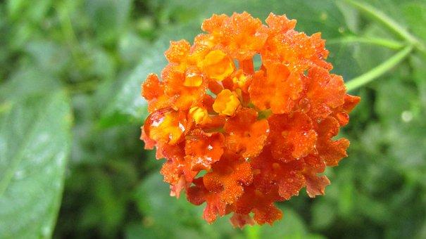 Flowers, Nature, Flora, Natural, Floral, Plant