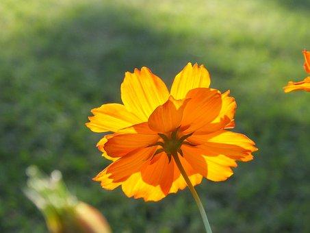 Flower, Sunlight, Floral, Summer