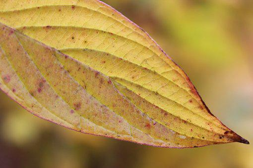 Autumn, Leaf, Leaves, Fall Foliage, Golden Autumn