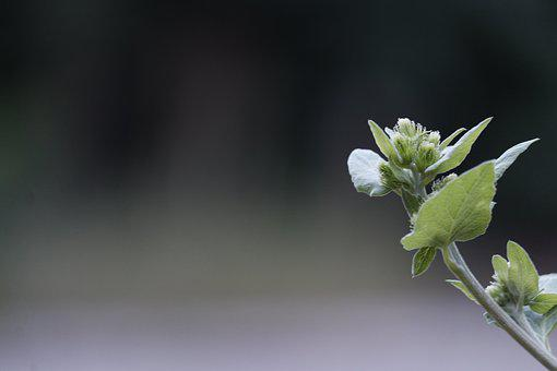 Green, Plant, Depth Of Field, Open, Growing, Nature