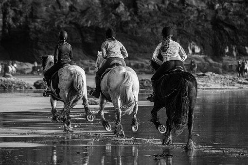 Horse, Races, Running