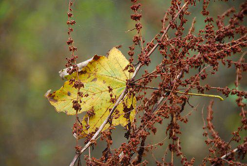 Leaf, Leaves, Autumn, Fall Foliage, Withered, Nature