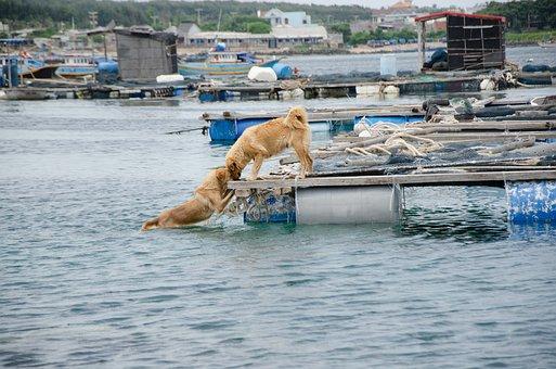 Dog, Love, Kiss, Sea, Young, Cute, Pet, Animal