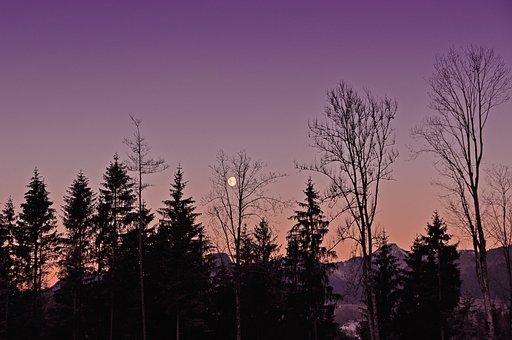Abendstimmung, Moon, Silhouette, Evening Sky