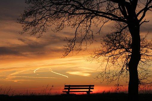 Tree, Sunset, Bench, Nature, Sun, Twilight, Gold
