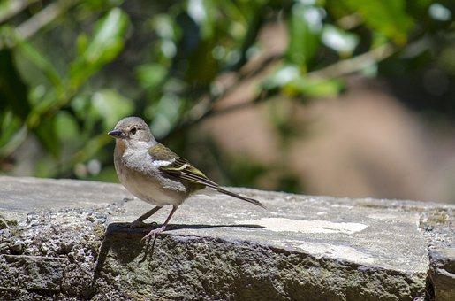 Bird, Nature, The Sparrow, Little Bird, Ornithology