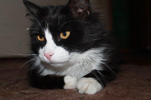 Cat, Home, Housecat, Young Cat, Cat Looking, Pets, Pet