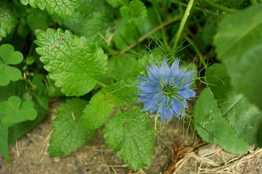 Garden, Gardening, Flower, Green, Nature, Plants