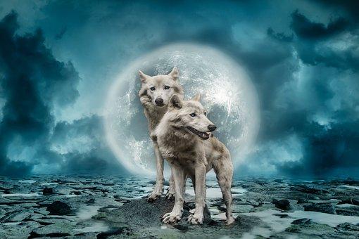 Wolves, Wolf, Predator, Full Moon, Clouds, Sky