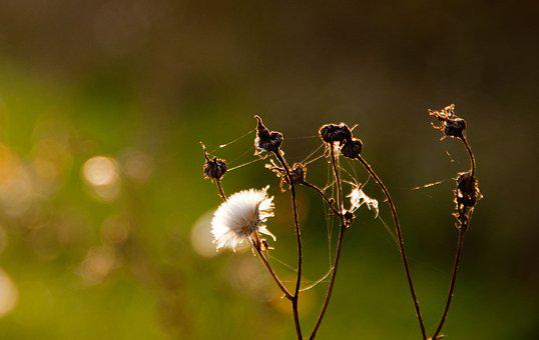Fall, Green, Plant, Autumn, Nature, Season, October