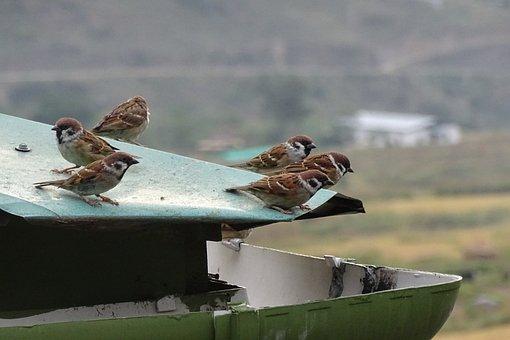 Top, Sparrow, Bird, Animal, Nature, Birds, Summer