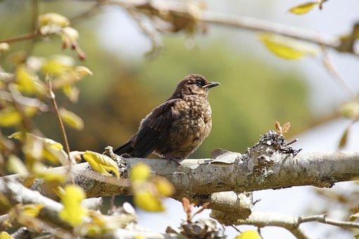 Bird, Brown, Tree, Green, Nature, Wildlife, Fauna, Beak