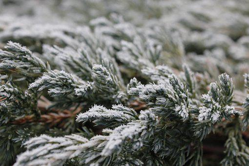Frost, Snow, Cold, Winter, Ice, Snowfall, Weather