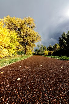 Path, Trail, Walking, Running, Yellow, Leaves, Cloudy