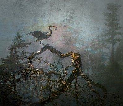 Blue Heron, Bird, Wildlife, Nature, Animal, Beak, Water