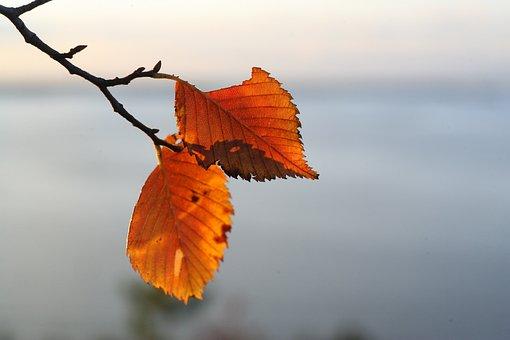 Leaves, Autumn, Autumn Nature, Autumn Leaves