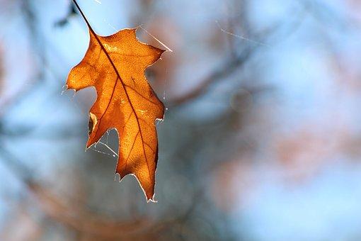 Leaf, Outdoors, Nature, Fall, Tree, Season, Flora